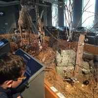 Museum des Volcans Aurillac