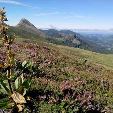 gentiane prise du Col de Rombière